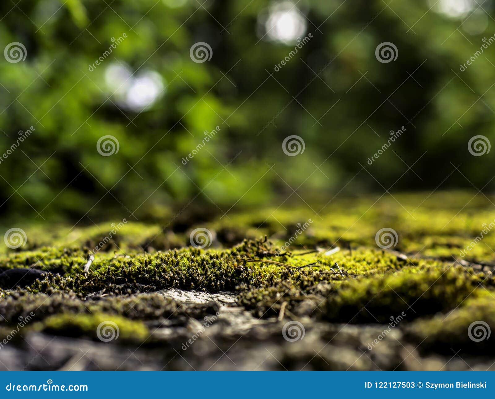 生长在自然被弄脏的背景的混凝土的青苔
