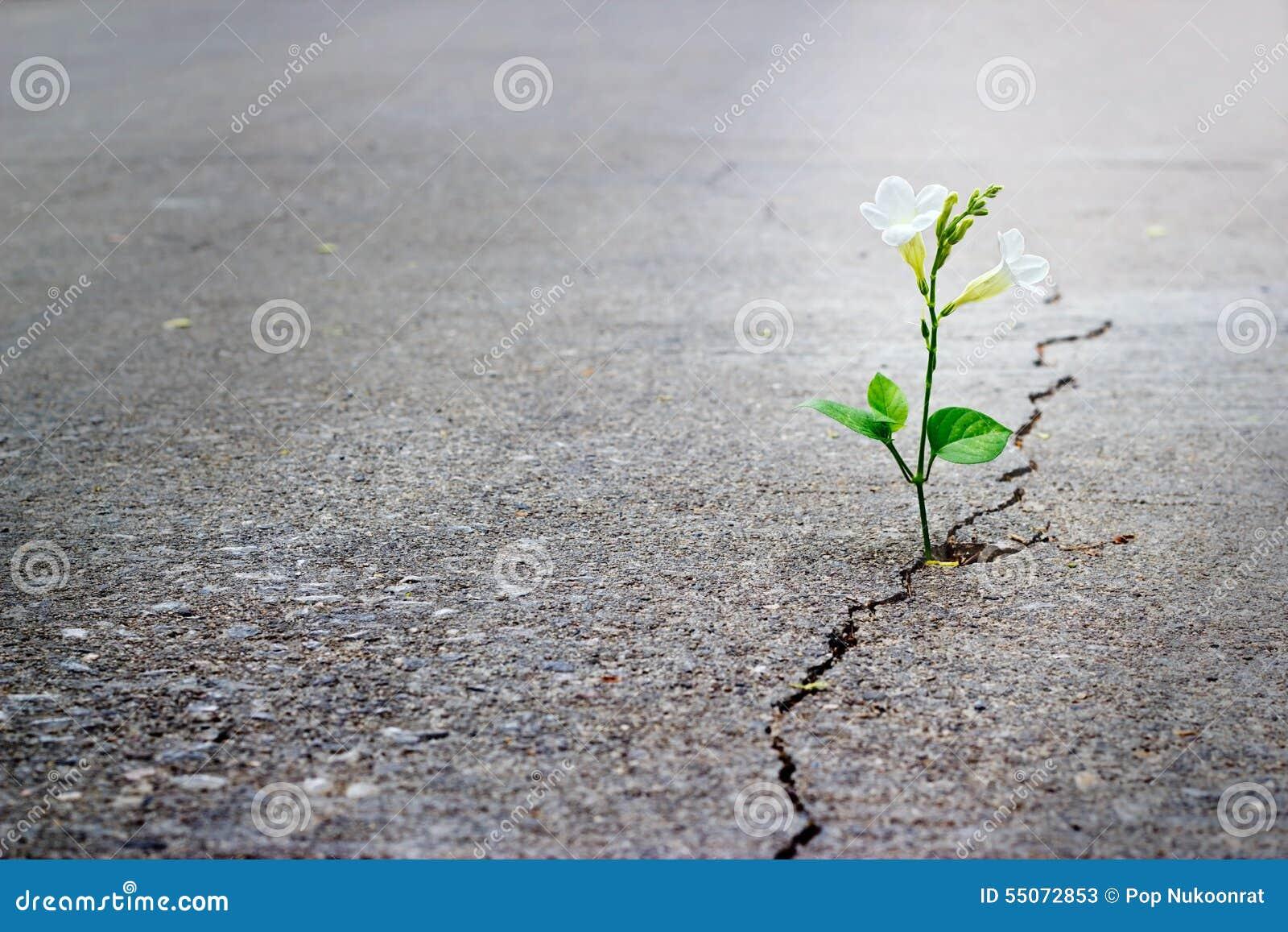 生长在高明的街道,软的焦点,空白的文本上的白花