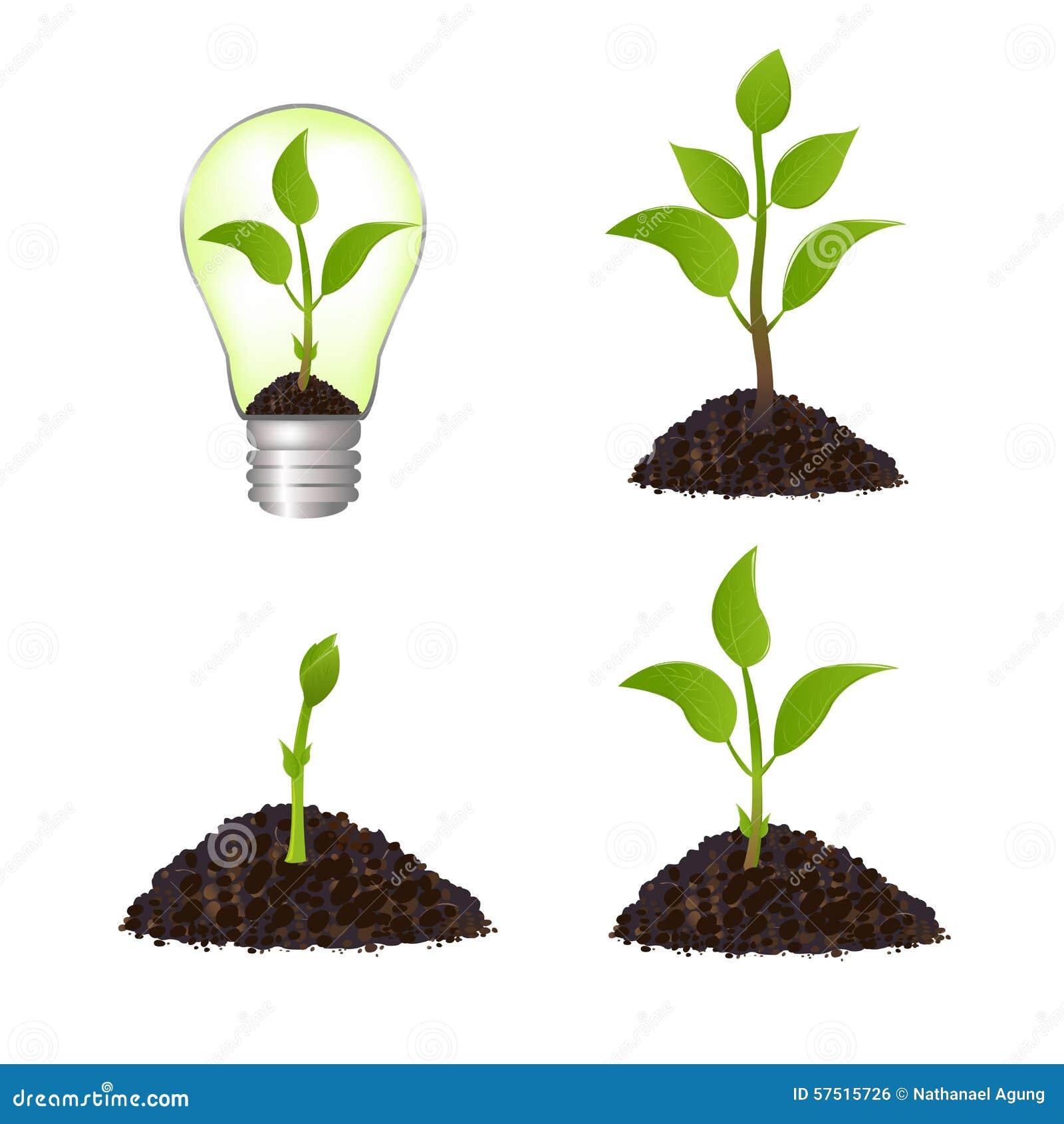 生长植物种子例证图片