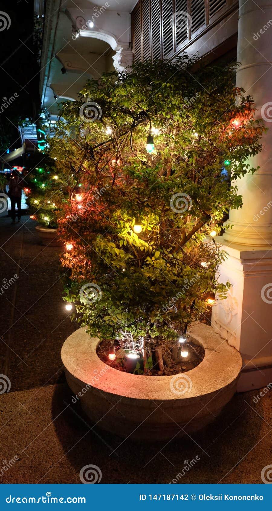 用在城市街道上的光装饰的植物