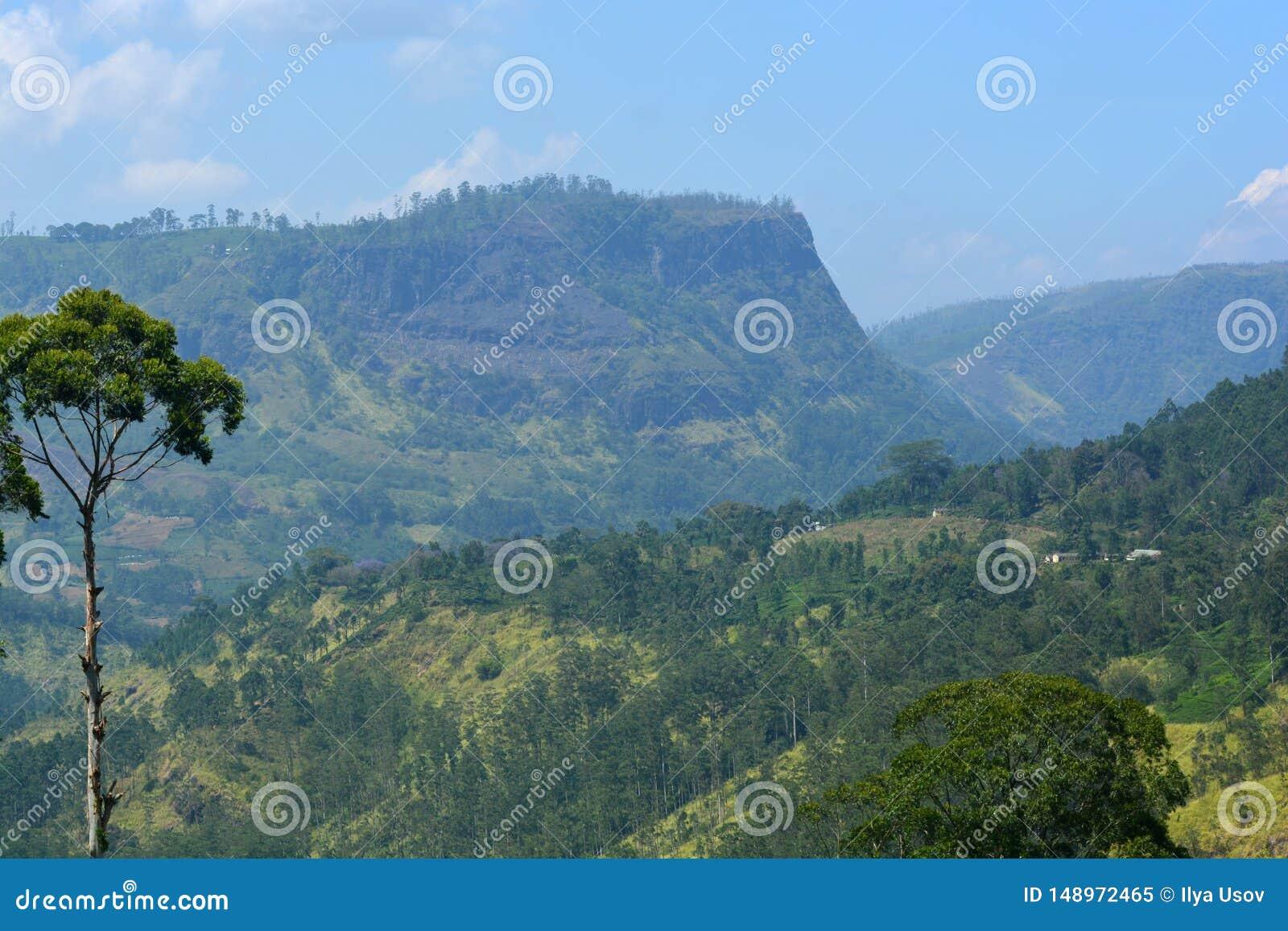 用斯里兰卡的自然风景的森林盖的山