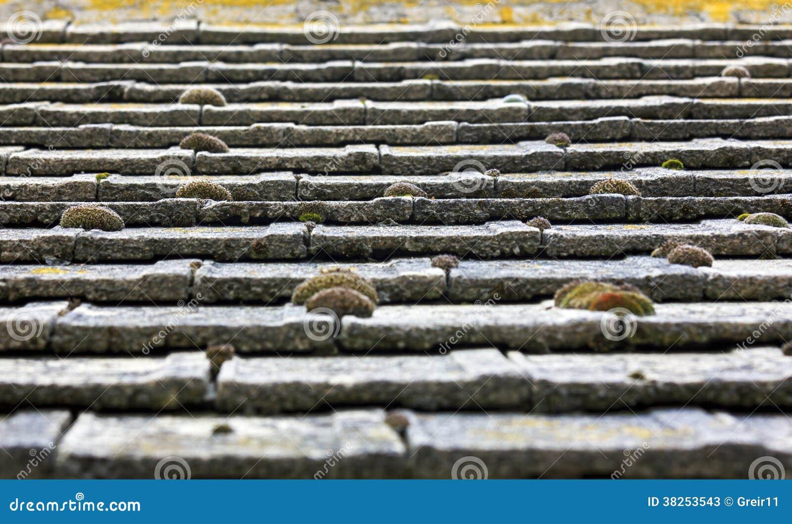 用青苔盖的铺磁砖的国家屋顶