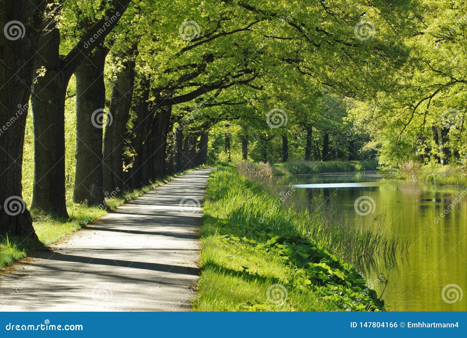 由运河的周期道路