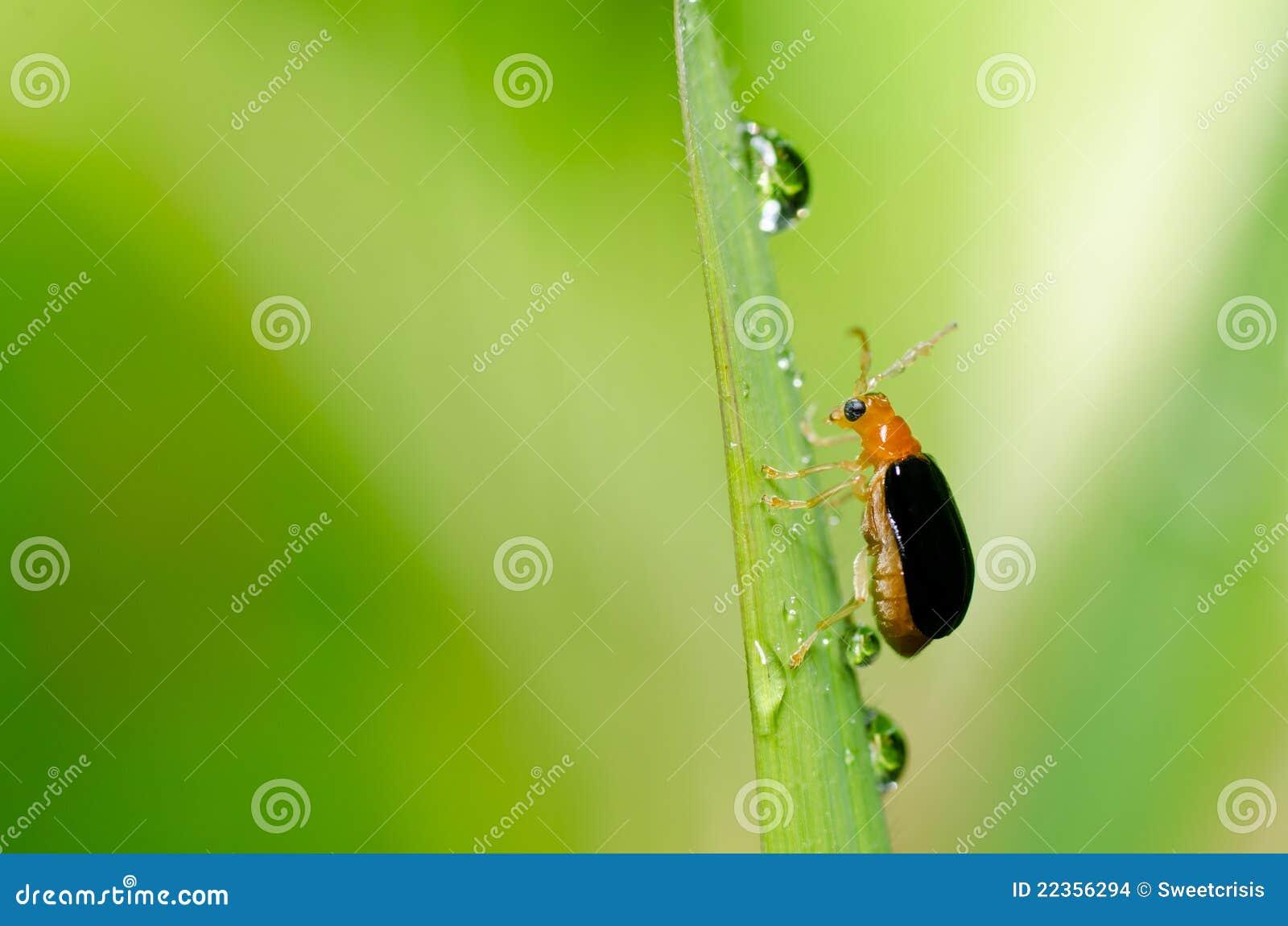 甲虫绿色本质桔子