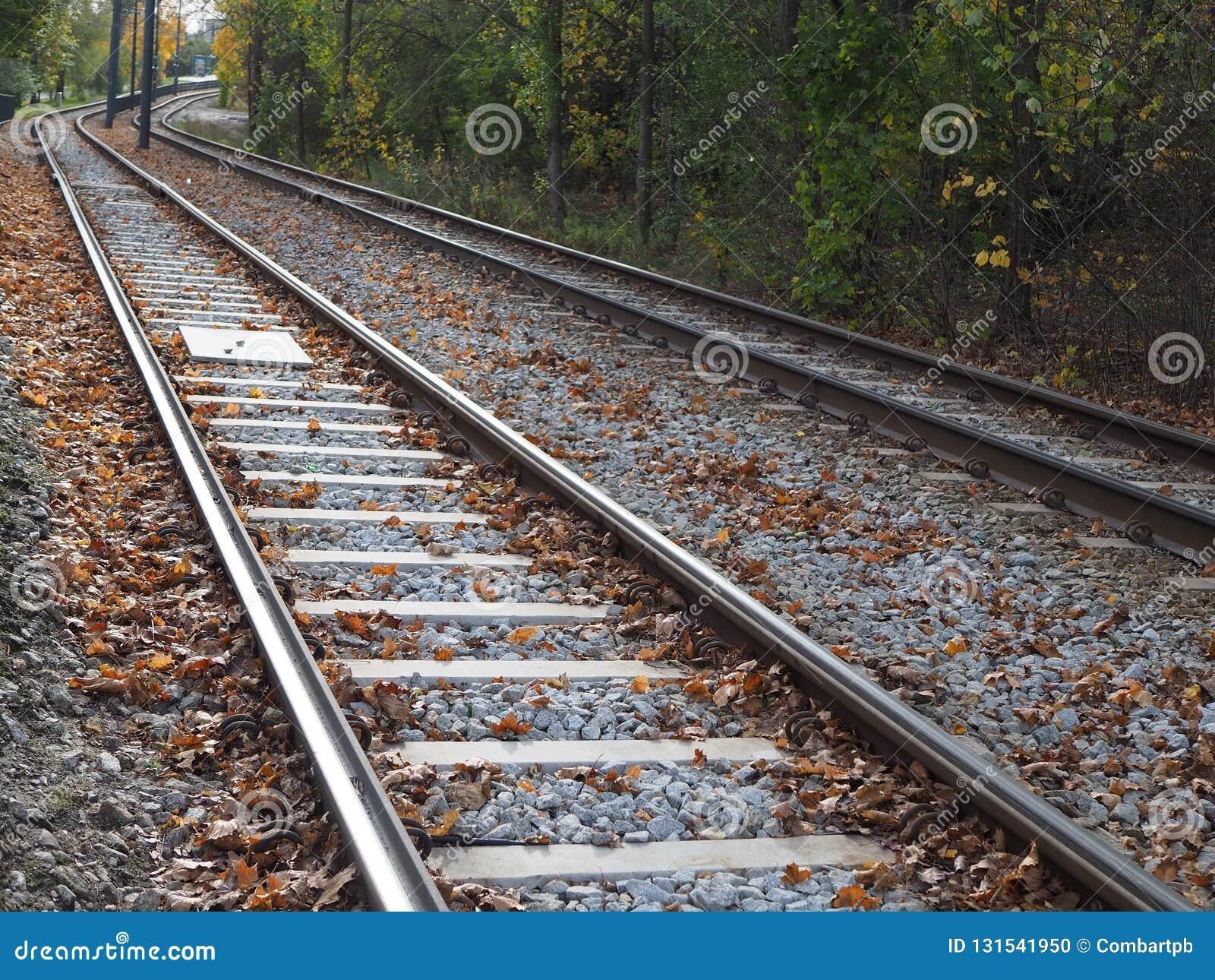 电车轨道在树,秋叶中的城市