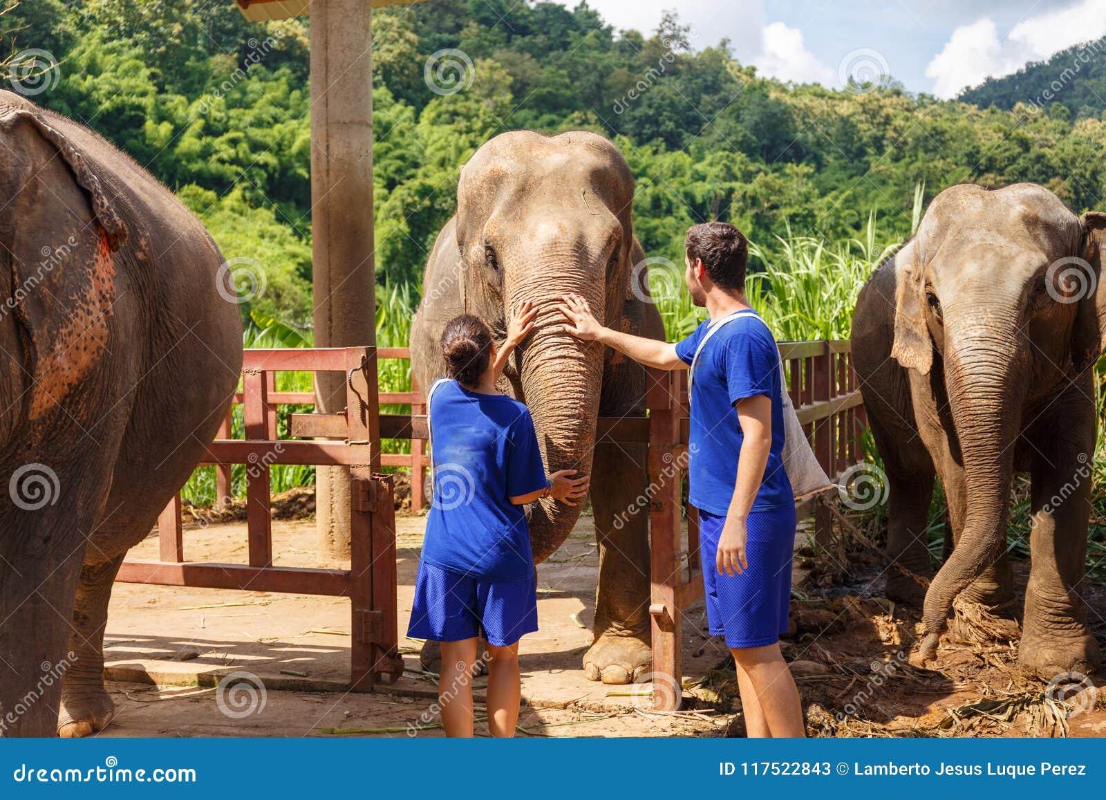 男孩和女孩爱抚大象在圣所在清迈T