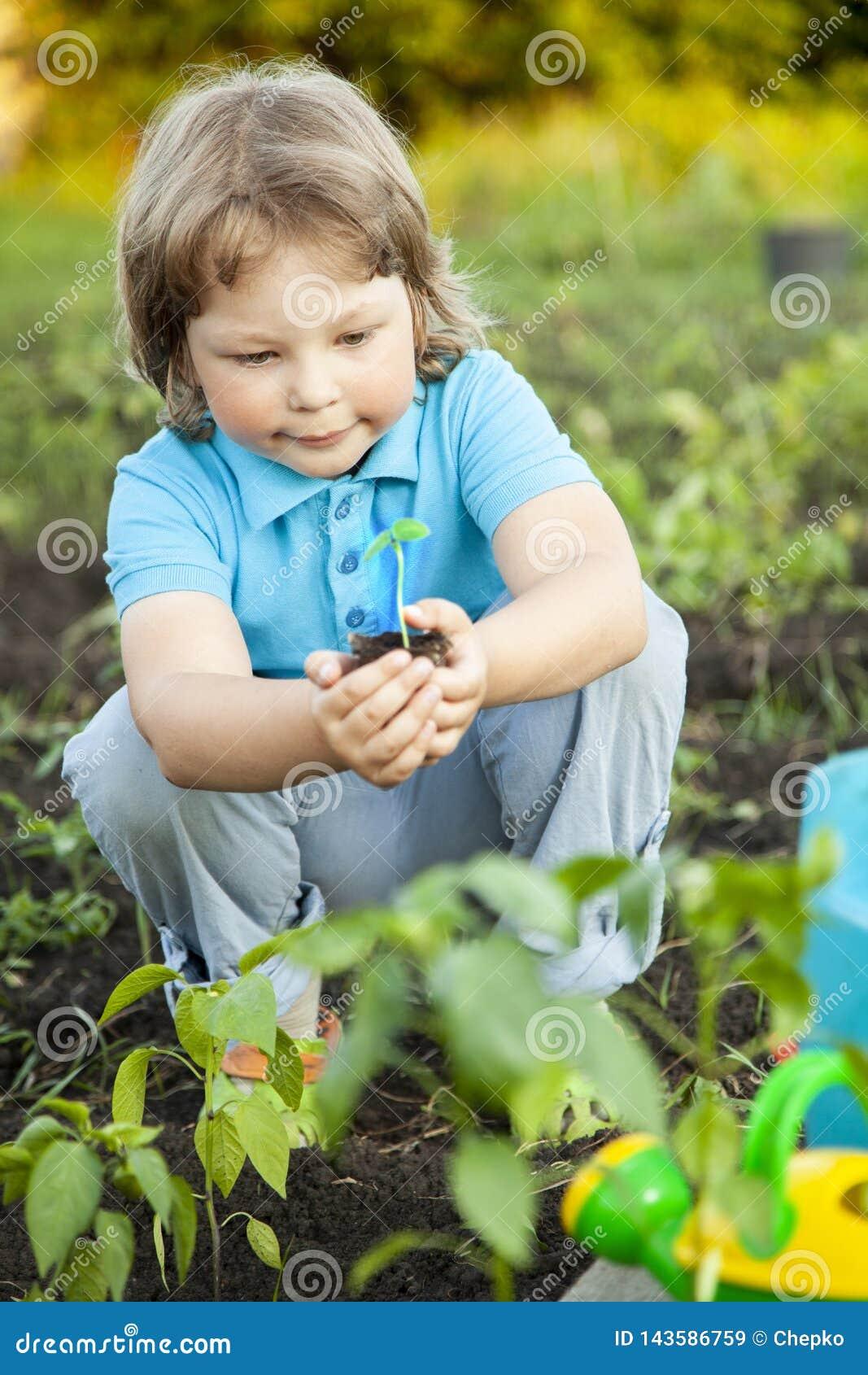 男孩在庭院在种植前敬佩植物 绿色新芽对于儿童手