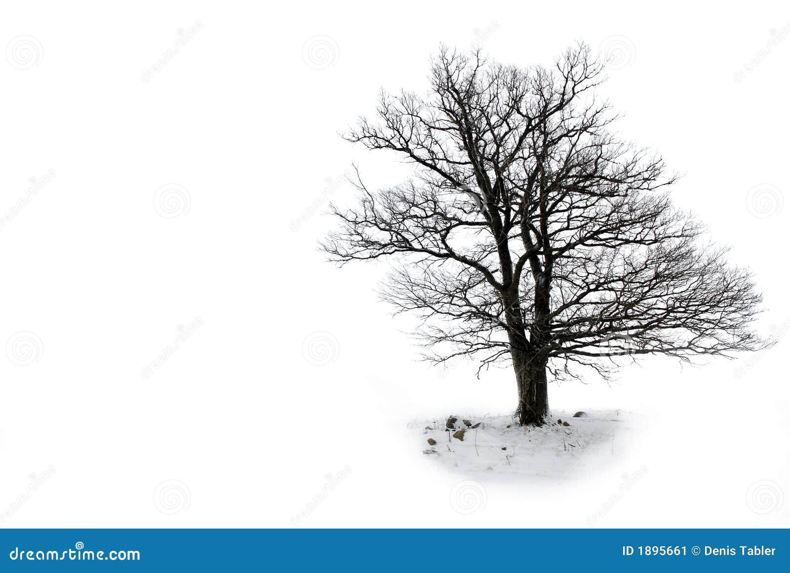 留下孤立结构树