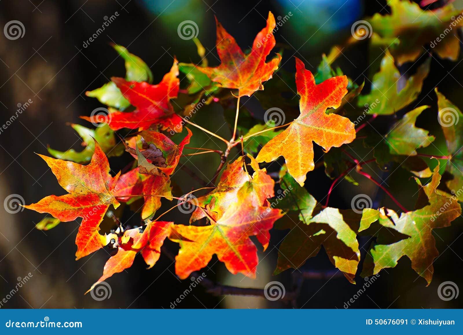 Download 留下红色 库存图片. 图片 包括有 公园, 森林, 汉语, 充气救生艇, 五边形, 叶子, 蓝色, 座右铭 - 50676091