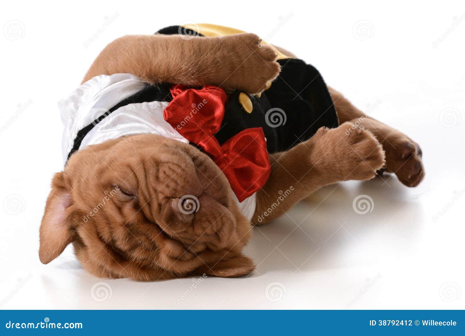 疲乏的小狗