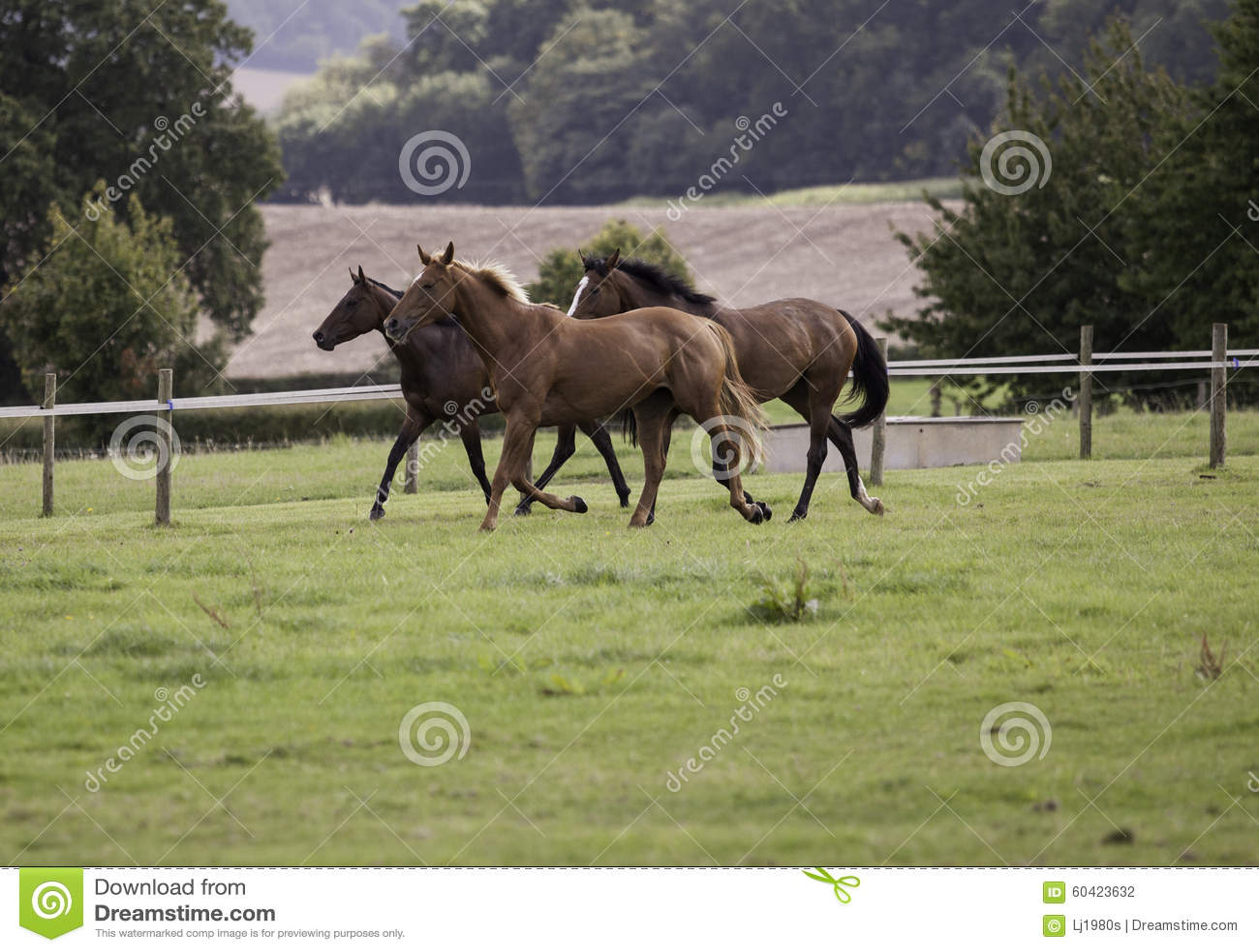 疾驰在领域的三匹马