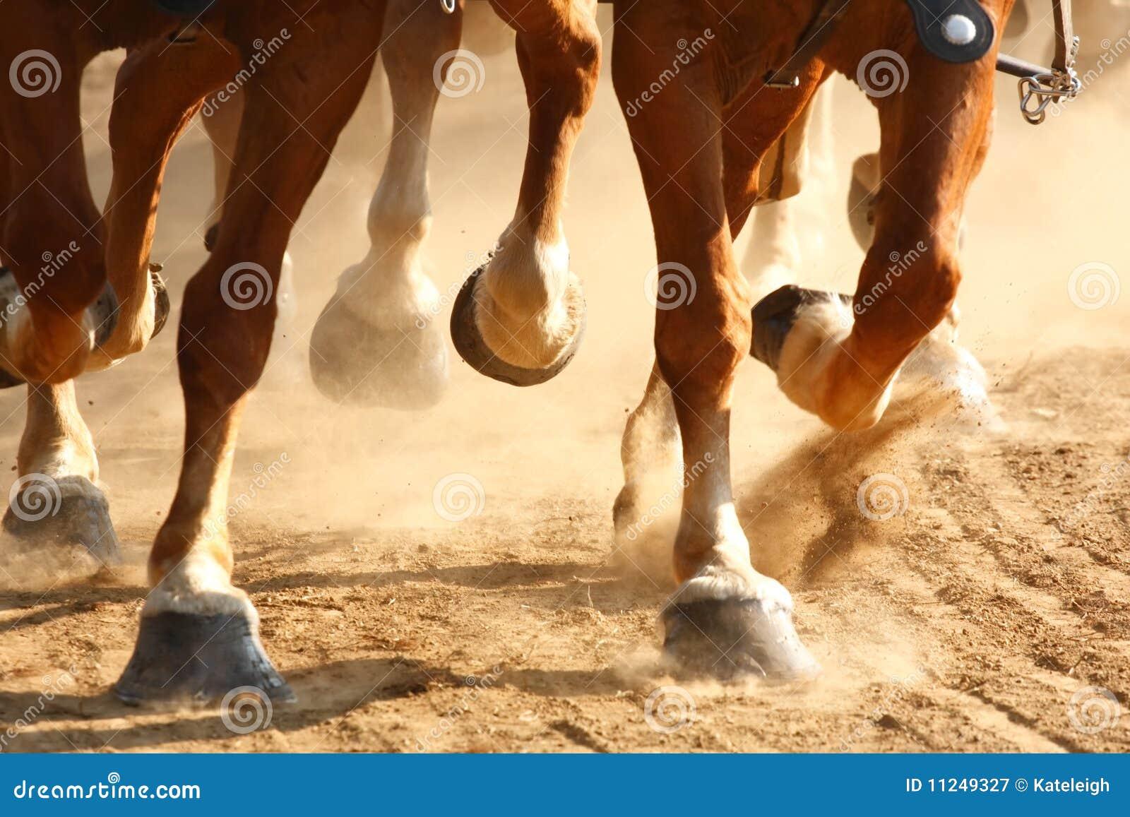 疾驰的蹄马