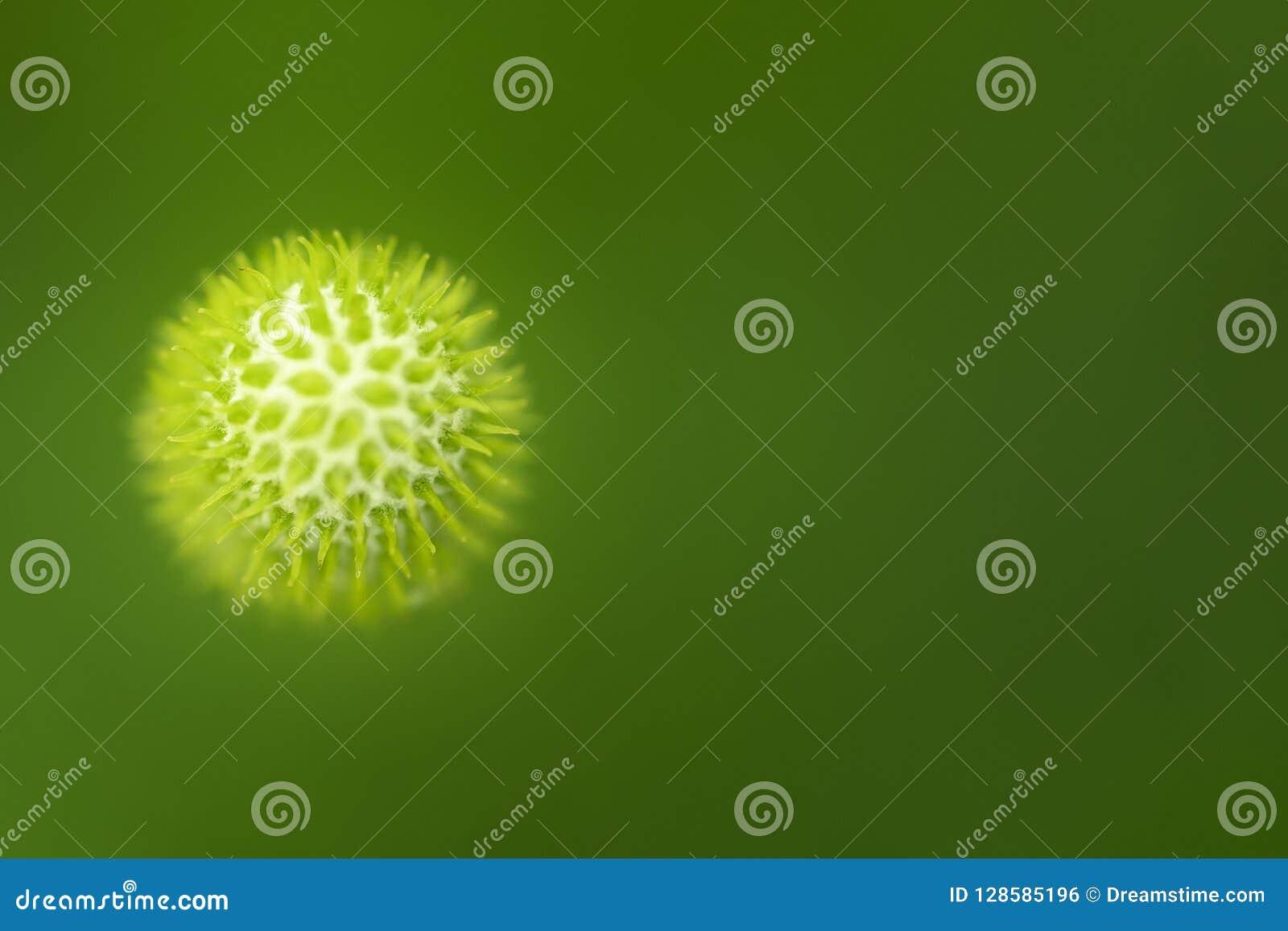 病毒 一个有机细胞的特写镜头图象在绿色背景的