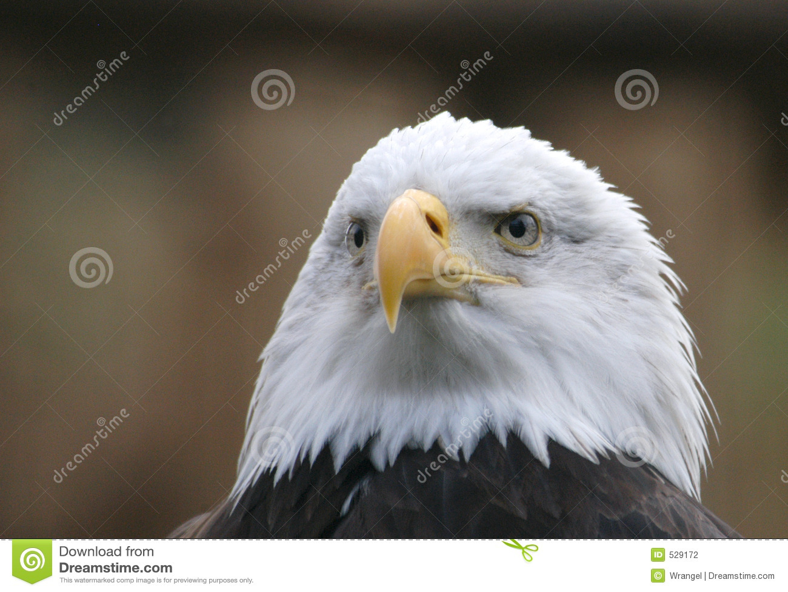 Download 白头鹰 库存照片. 图片 包括有 广告牌, 查找, 老鹰, 象征, 扫视, 国家, 爱国, 题头, 自由, 爱国心 - 529172