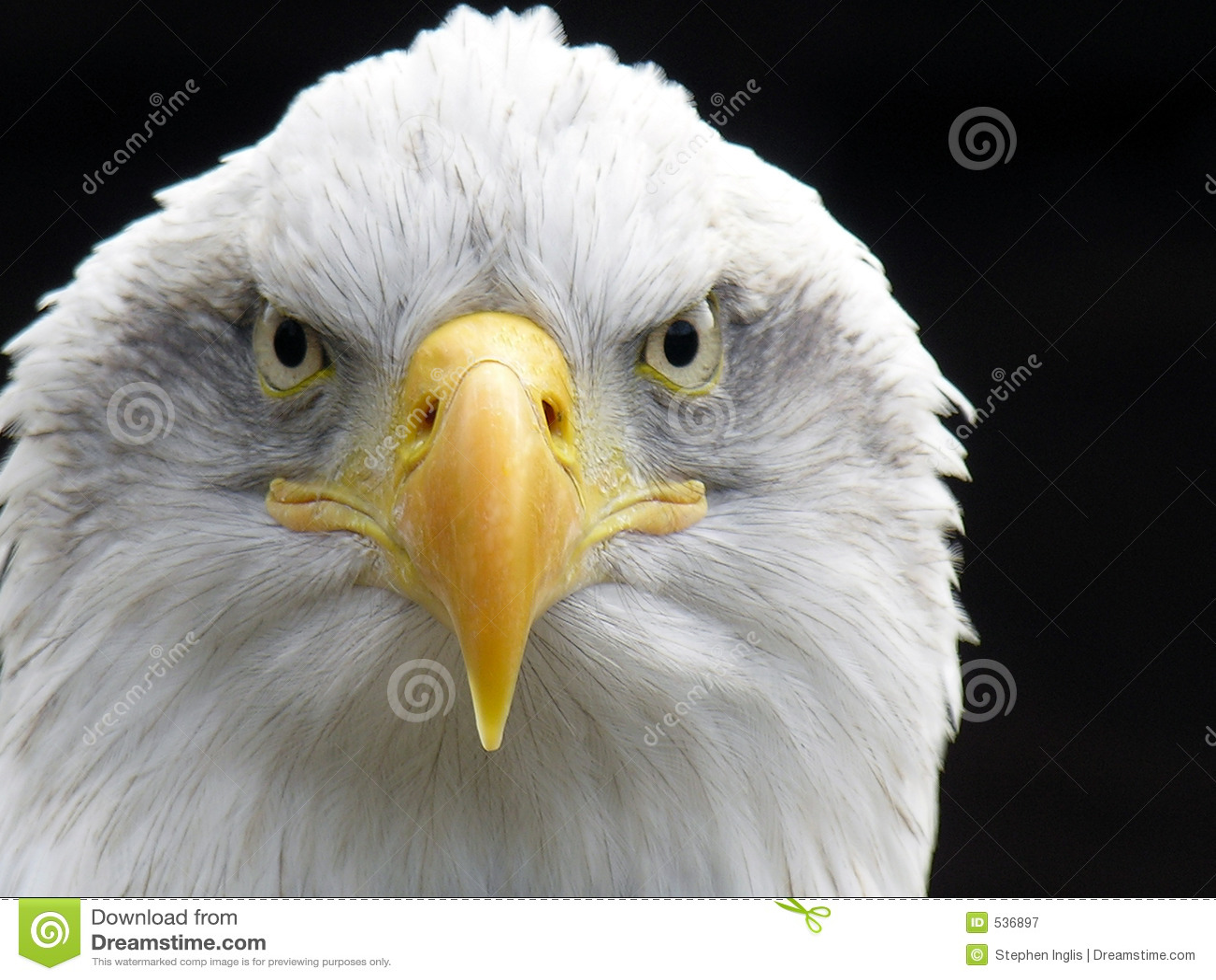Download 白头鹰 库存图片. 图片 包括有 本质, 很快, 烧杯, 飞行, 老鹰, 猎人, 眼睛, 强大, 被平衡的, 猛禽 - 536897