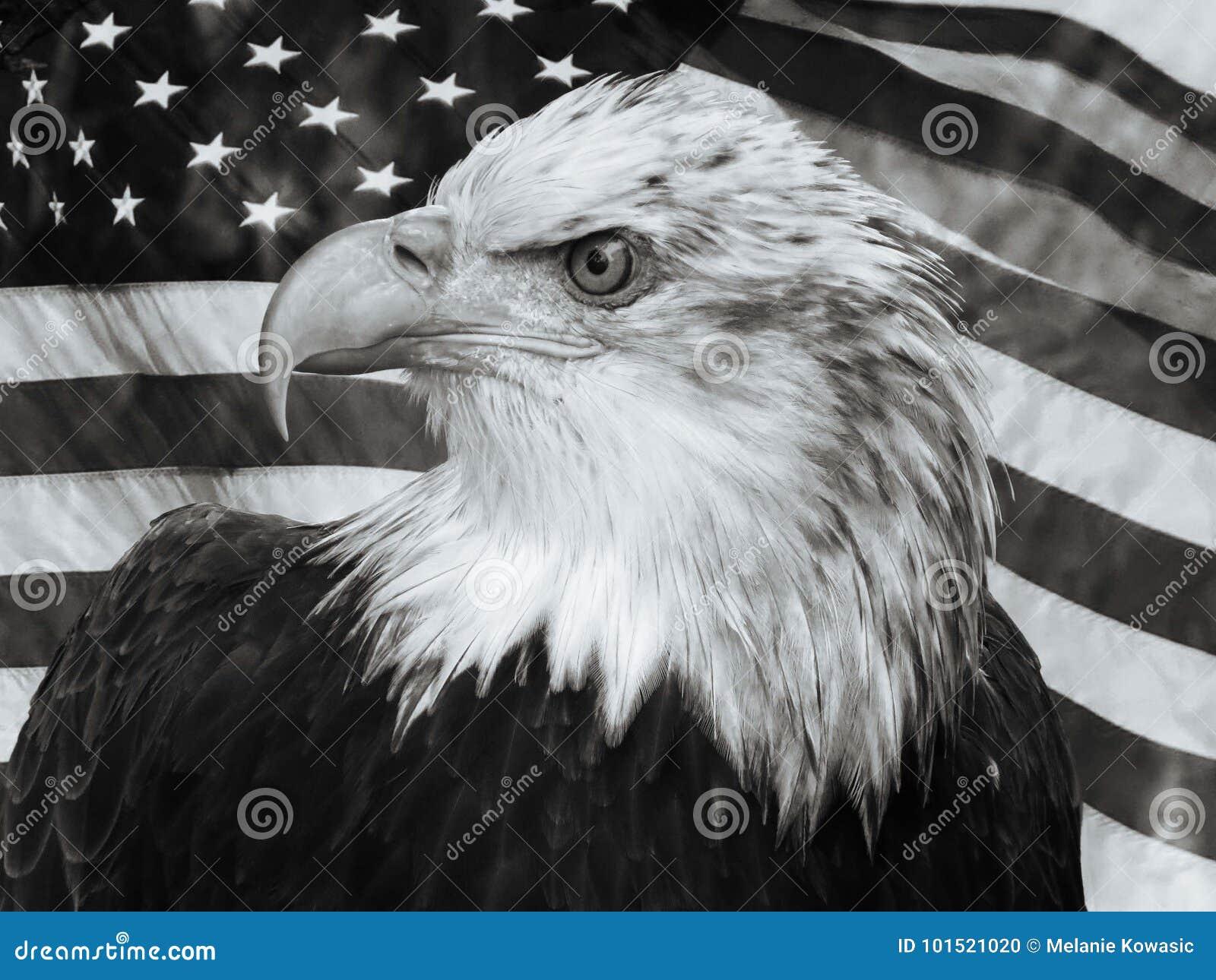 白头鹰U S 旗子画象