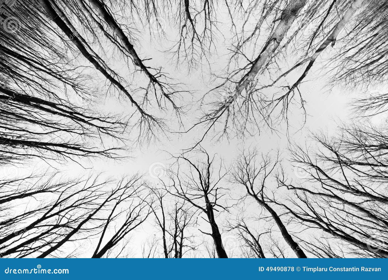 黑白的森林