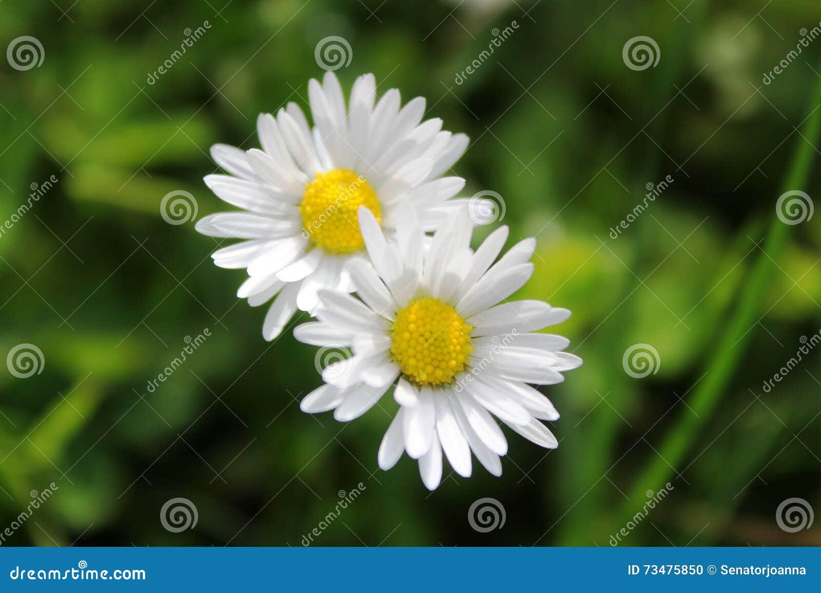 白的黄色小的花