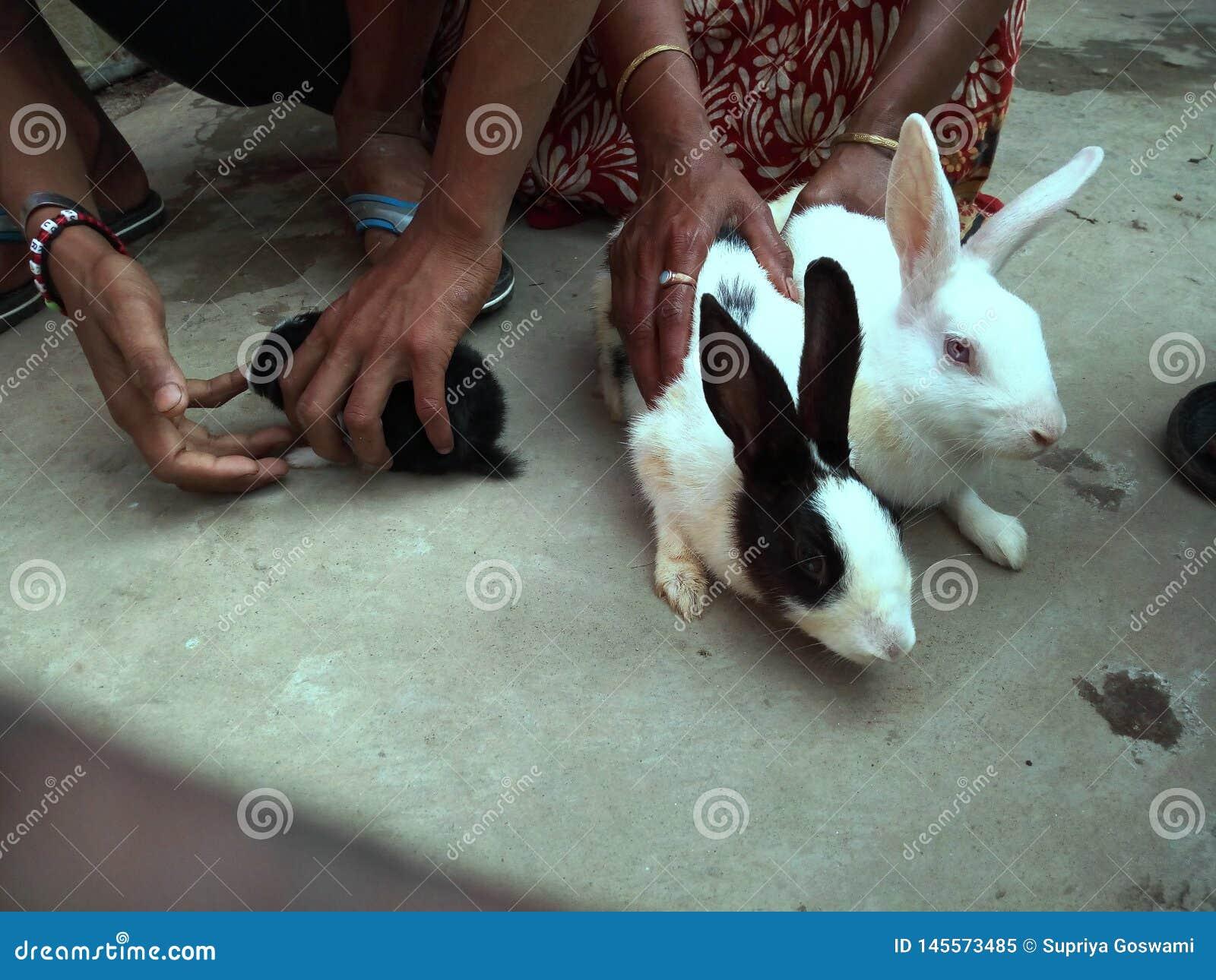 白色兔子等待他们的食物