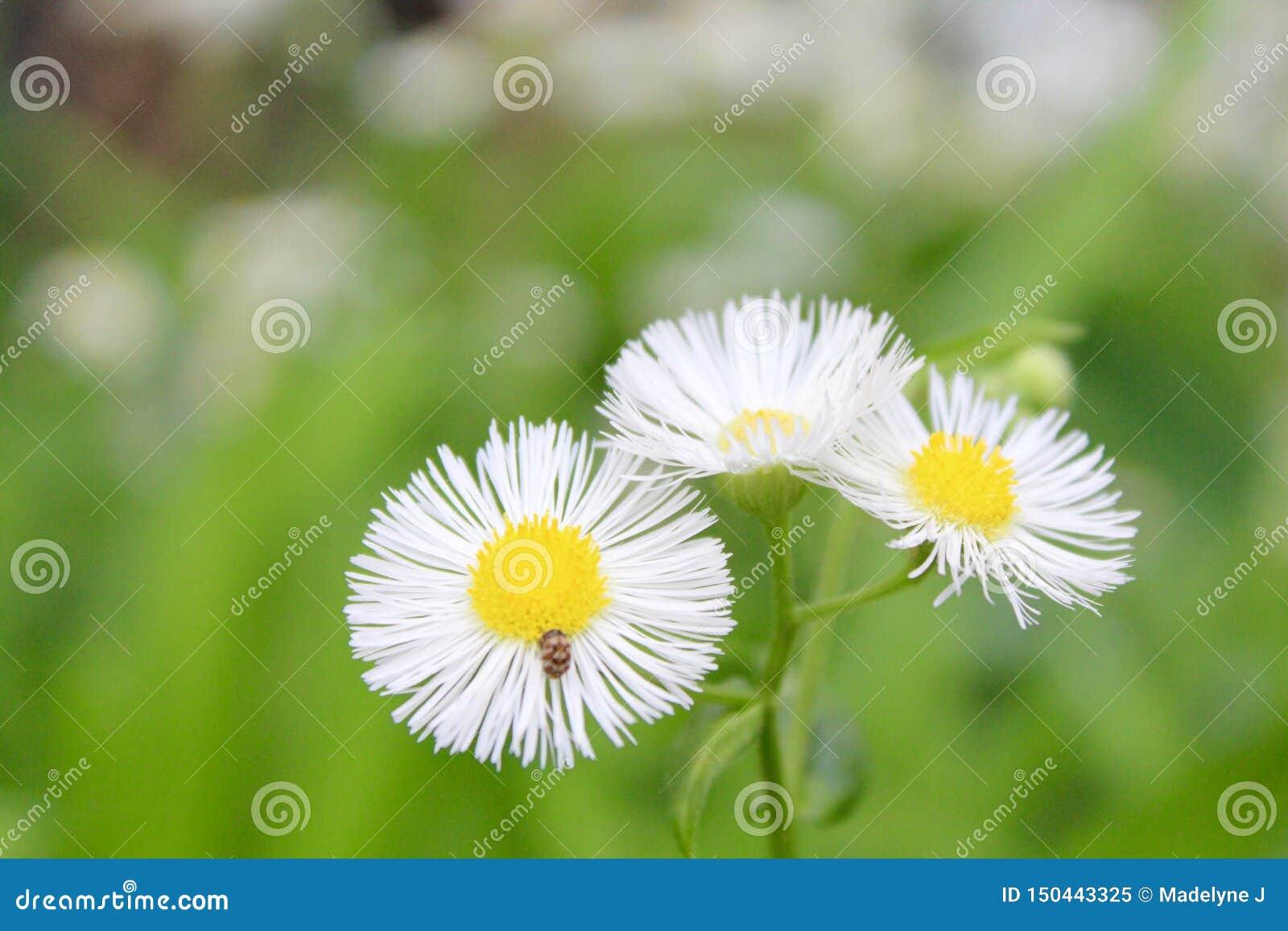 白色和黄色野花