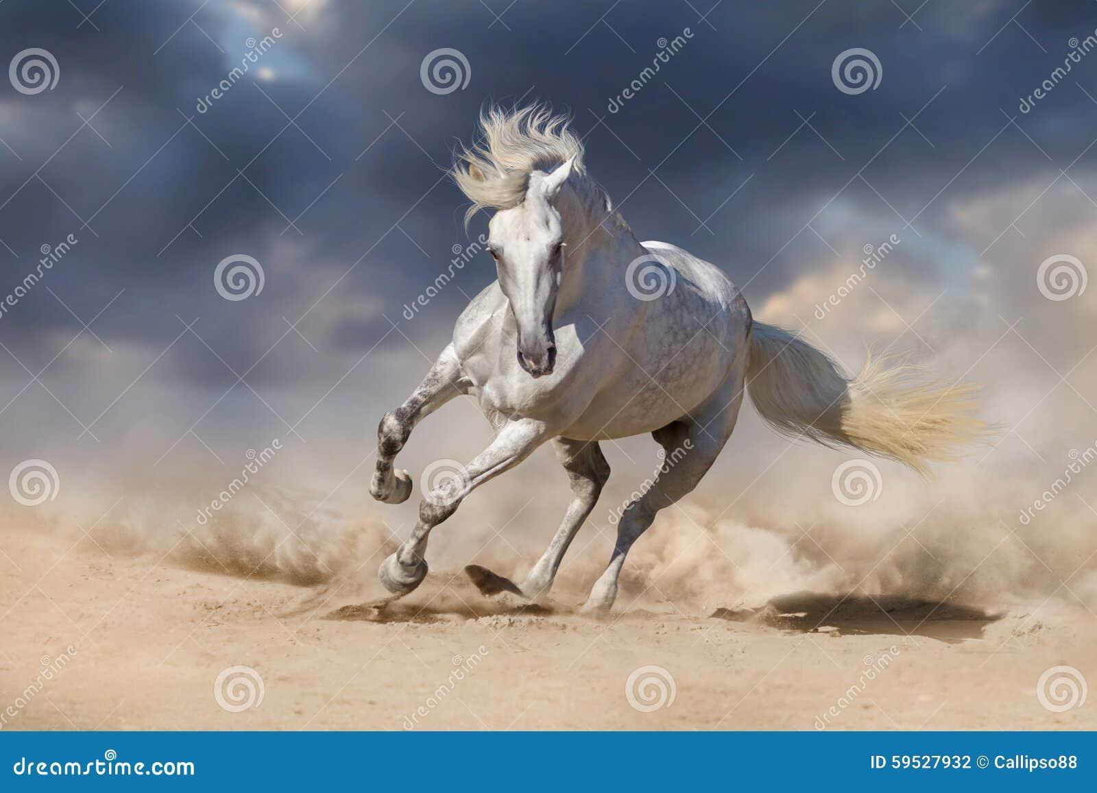 白色安达卢西亚的马