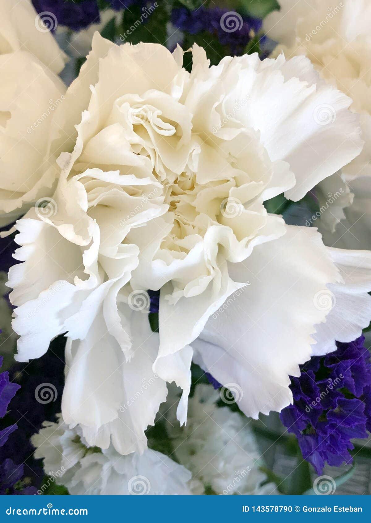 白色开花关闭