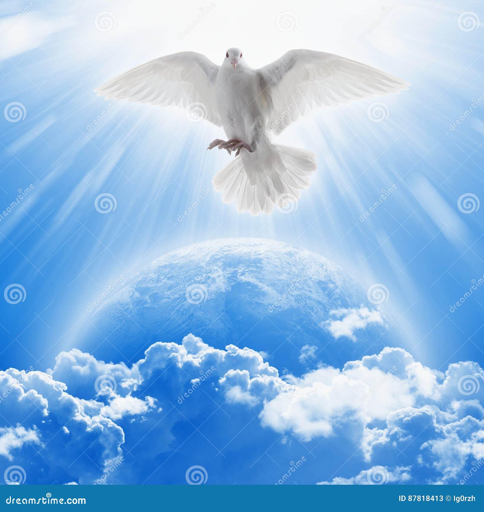白色爱和和平的鸠标志在行星地球上飞行