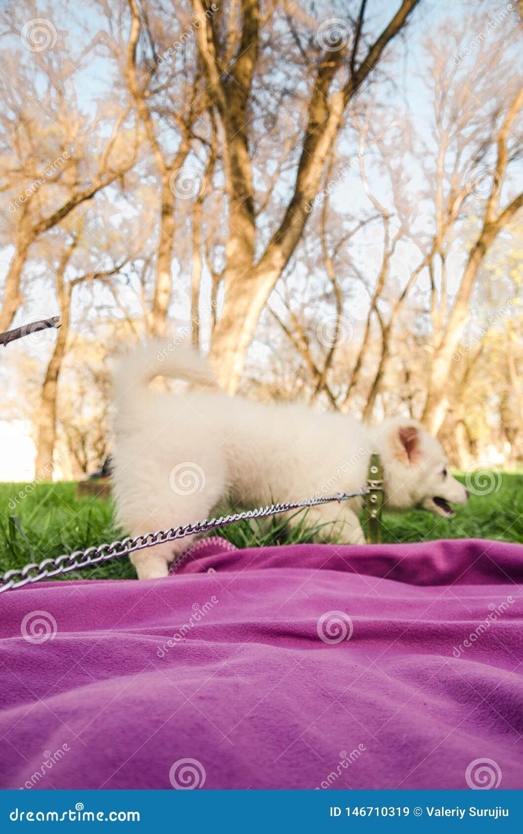 白色狗在公园