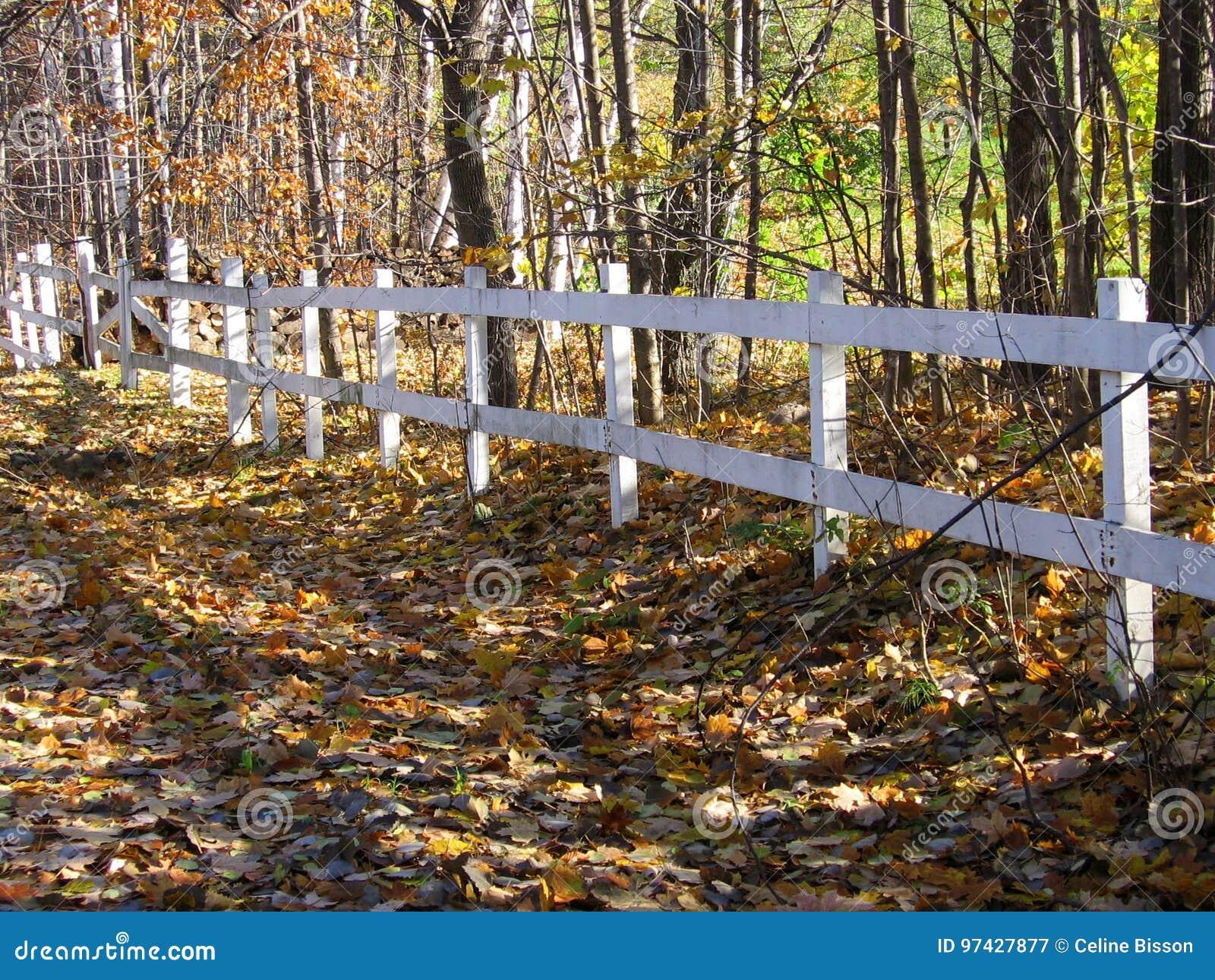 白色篱芭由木头制成在森林和路附近被盖叶子在秋天股票照片期间