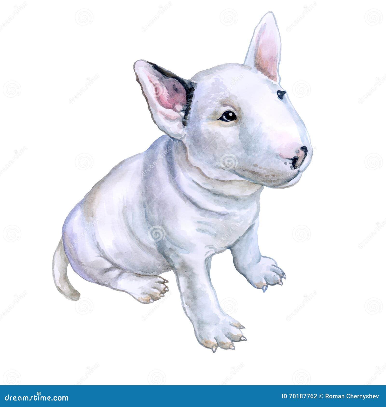 狗猩交配视频_白色英国杂种犬水彩画象,在白色背景的白色骑士品种狗小狗 手 ...