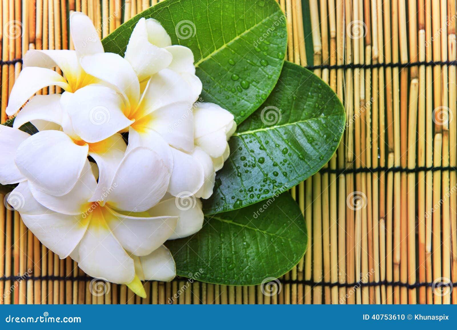 白色赤素馨花开花花束,并且绿色离开与新wat