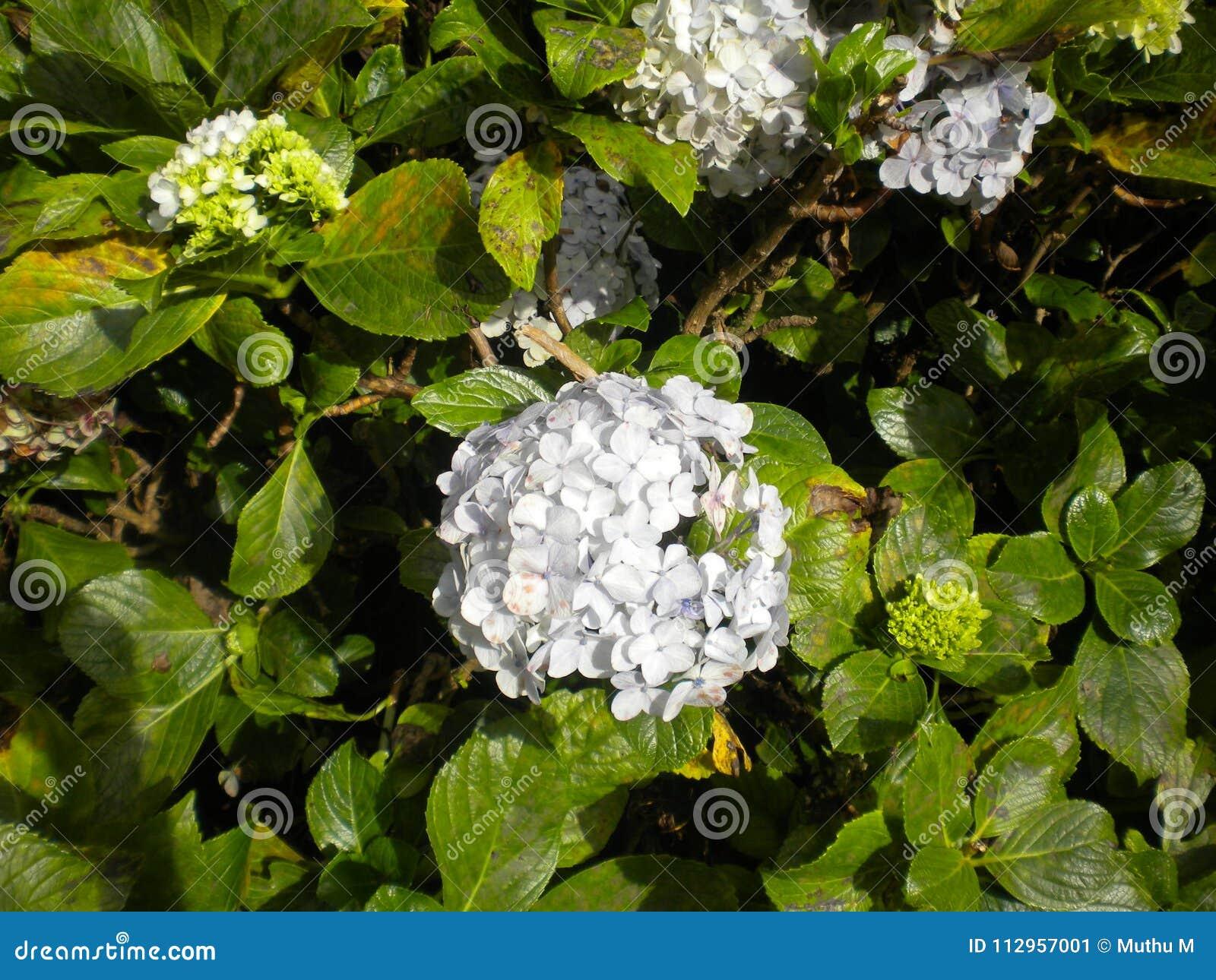 白色颜色花和背景