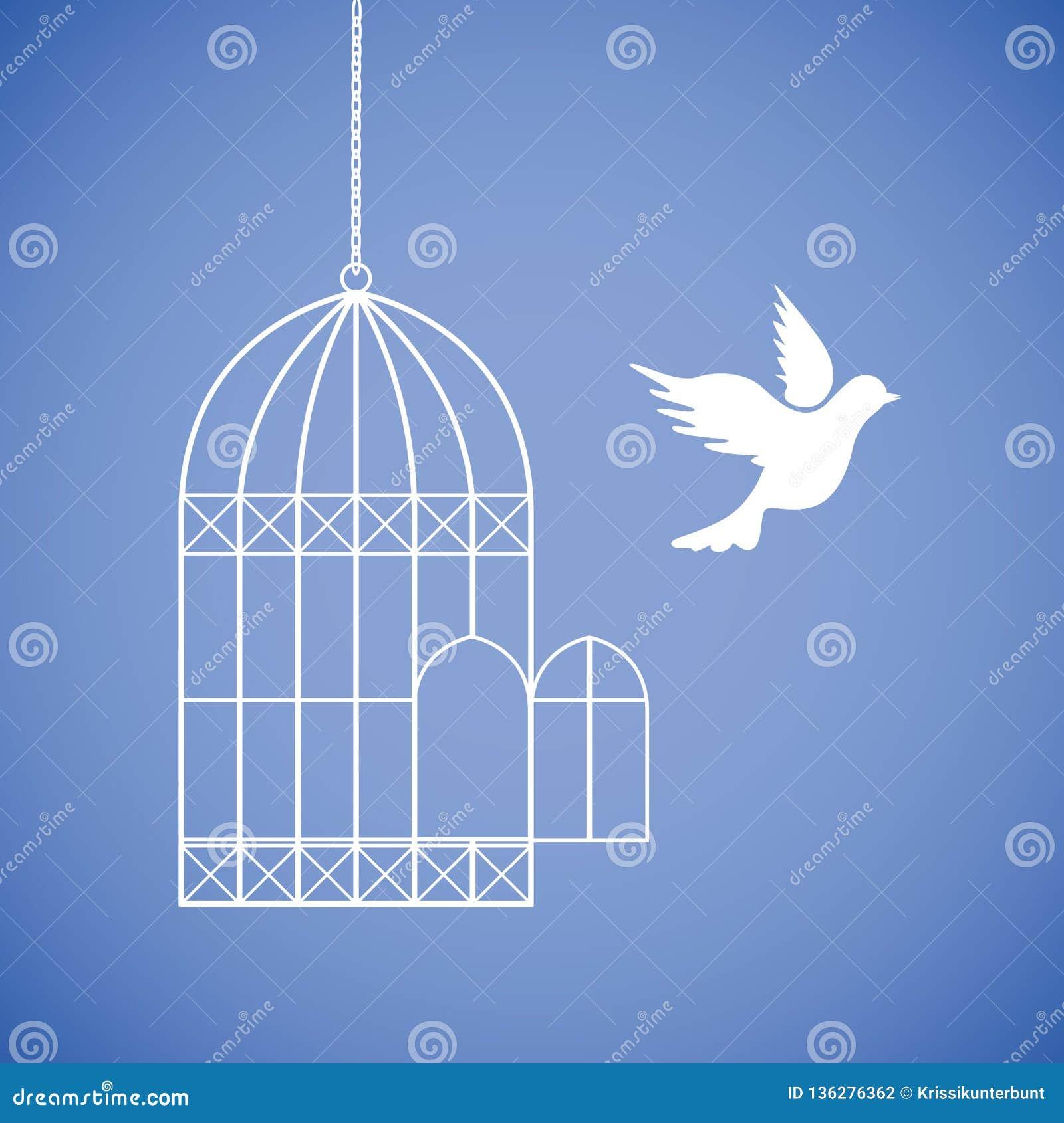 白色鸠飞行在笼子外面