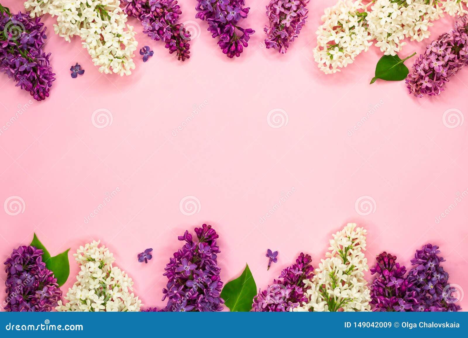 白色,紫色和紫罗兰色淡紫色花美好的花卉框架在浅粉红色的背景的 r r 浪漫的夏天