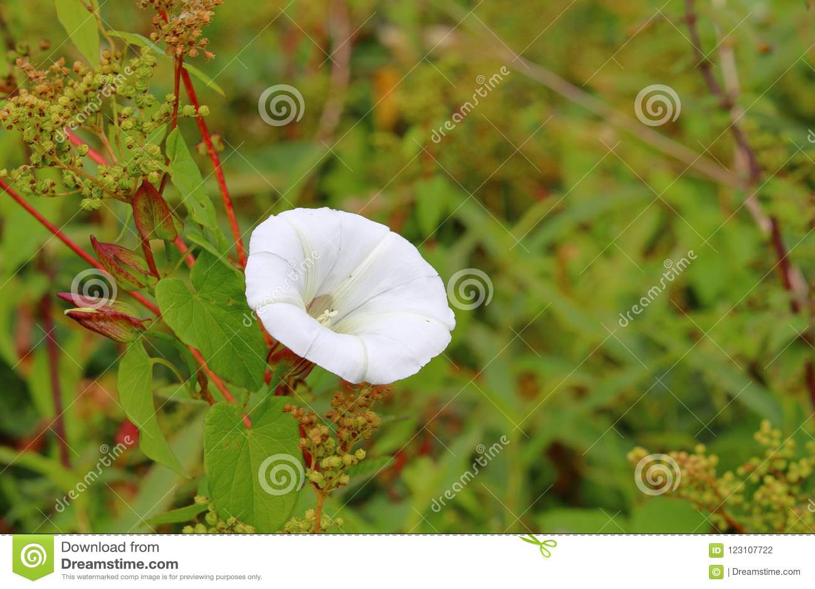 白花和绿色叶子