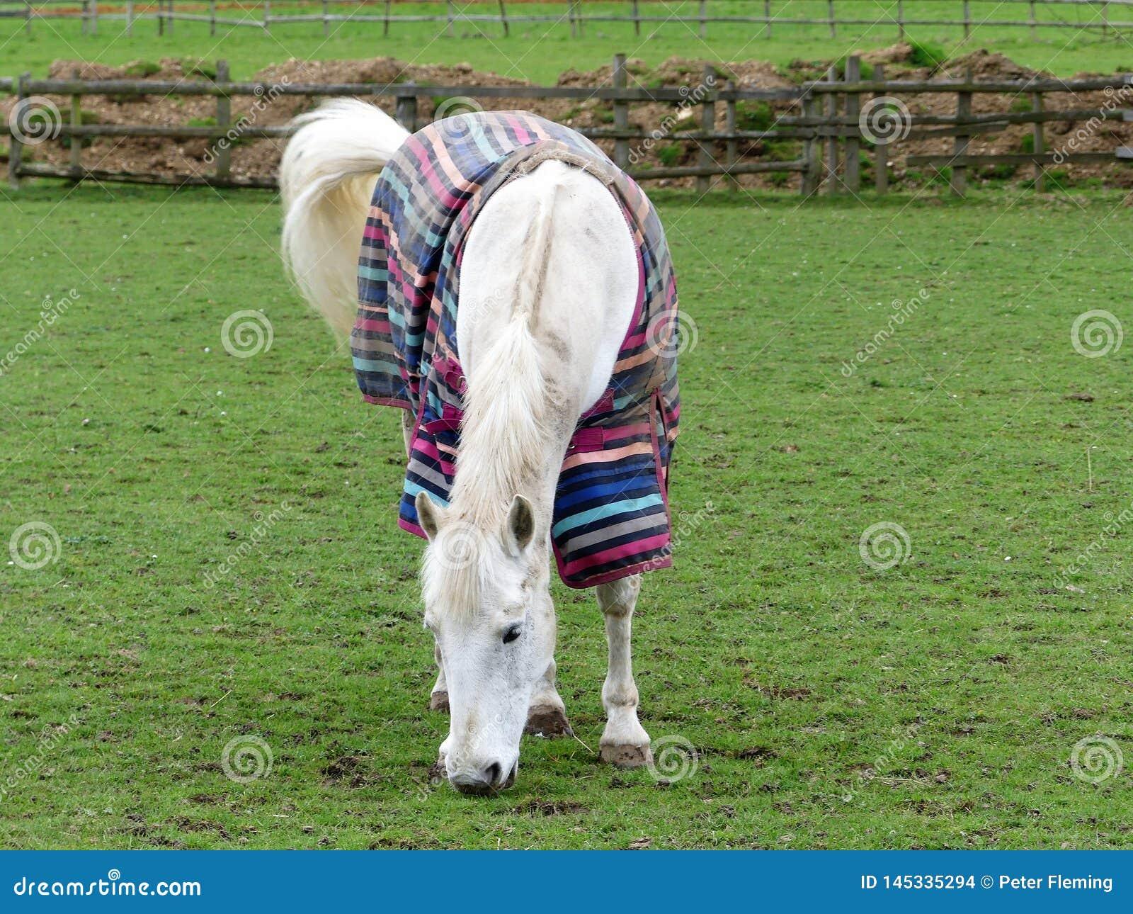 白马佩带的镶边冷天外套
