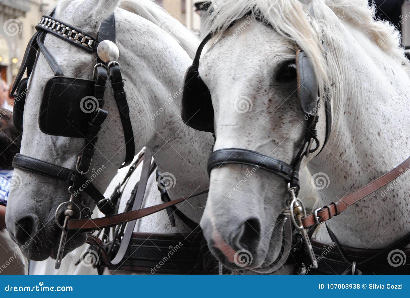 白马夫妇与马眼罩的