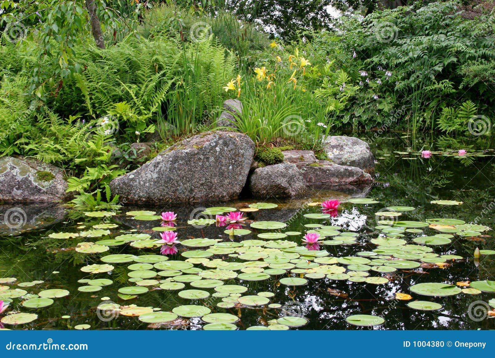 百合池塘红色
