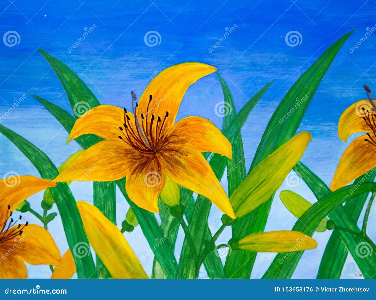 百合花黄色反对天空蔚蓝的绿色