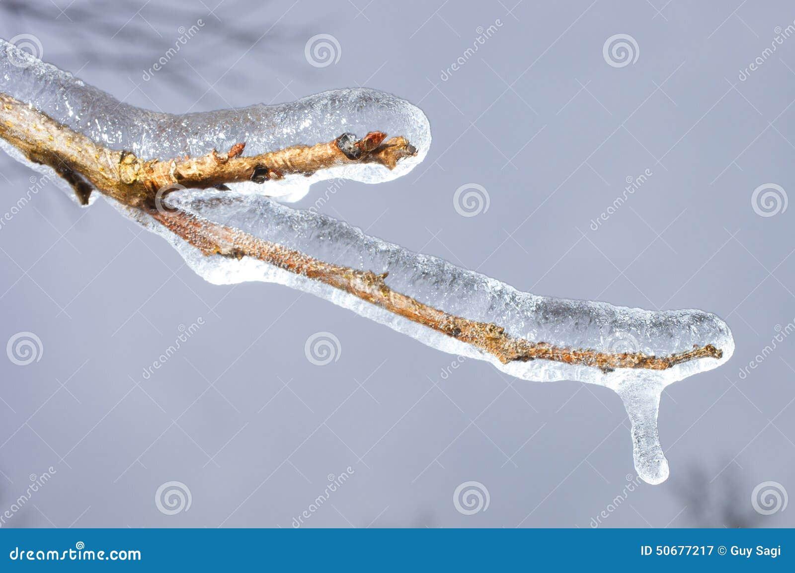 Download 冻结的分行 库存图片. 图片 包括有 冬天, 棕褐色, 蓝色, 风暴, 冻结, 木头, 黄色, browne - 50677217