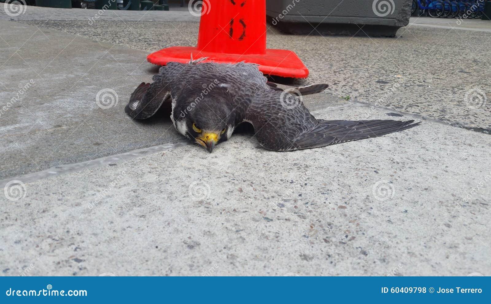 死的旅游猎鹰1