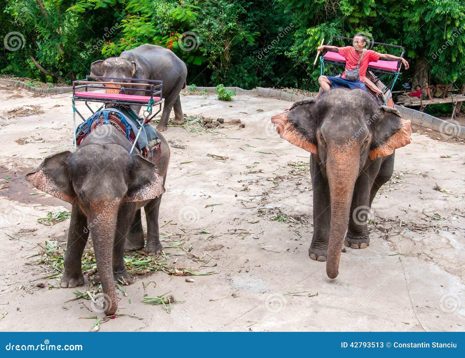 的Mahout和等待他的大象开始与游人的游览
