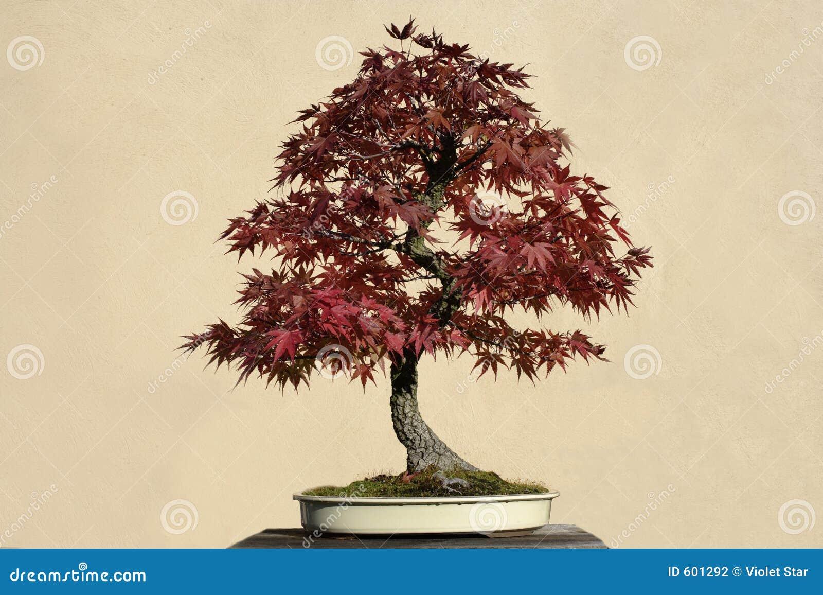 盆景结构树