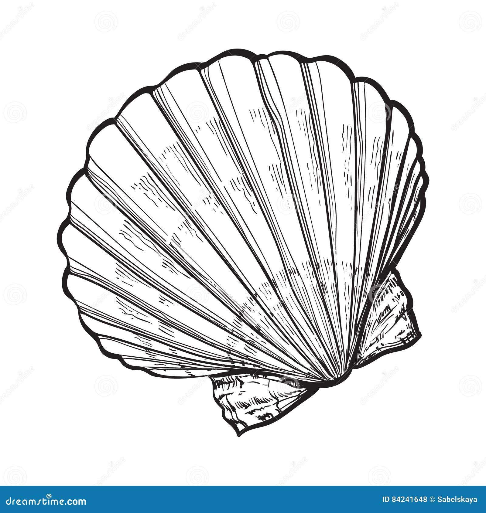 盐水扇贝海壳,被隔绝的剪影样式传染媒介例证