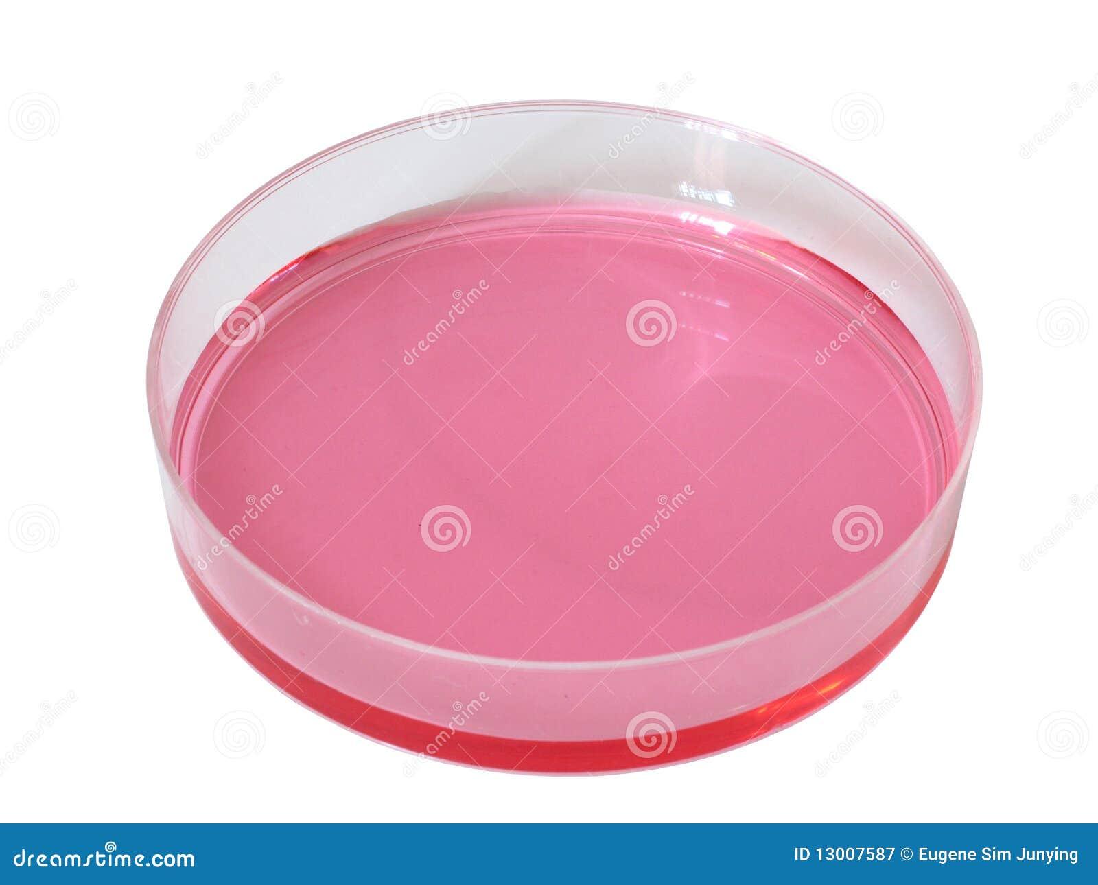 盘液体陪替氏红色