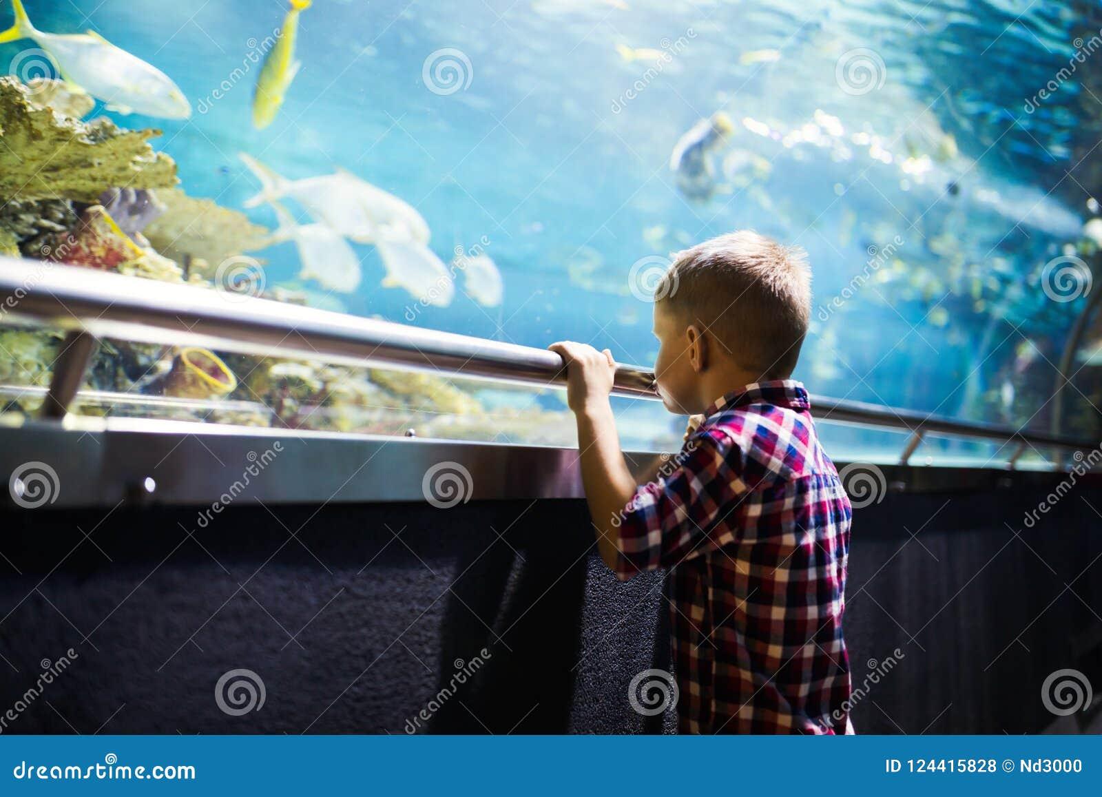 看在有热带鱼的水族馆的严肃的男孩