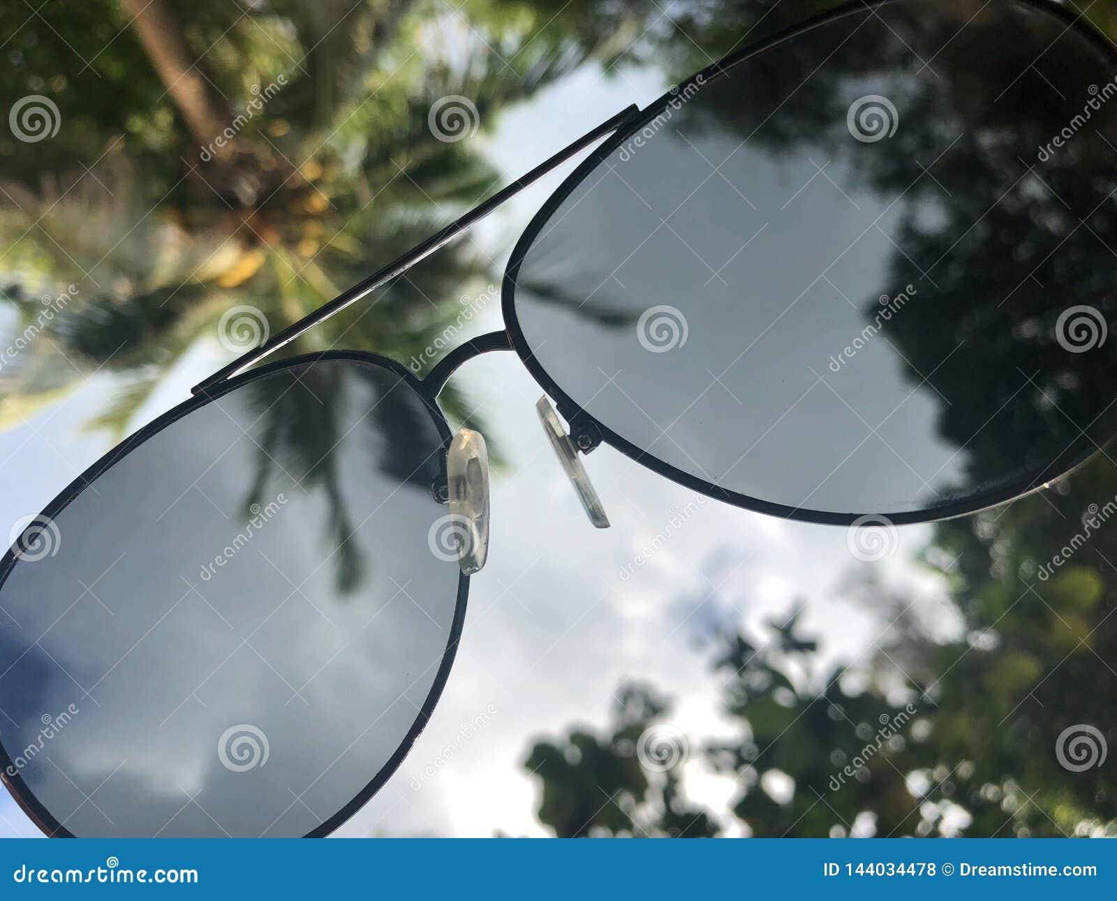 看法通过对南部的天空和棕榈树的太阳镜,感觉休闲