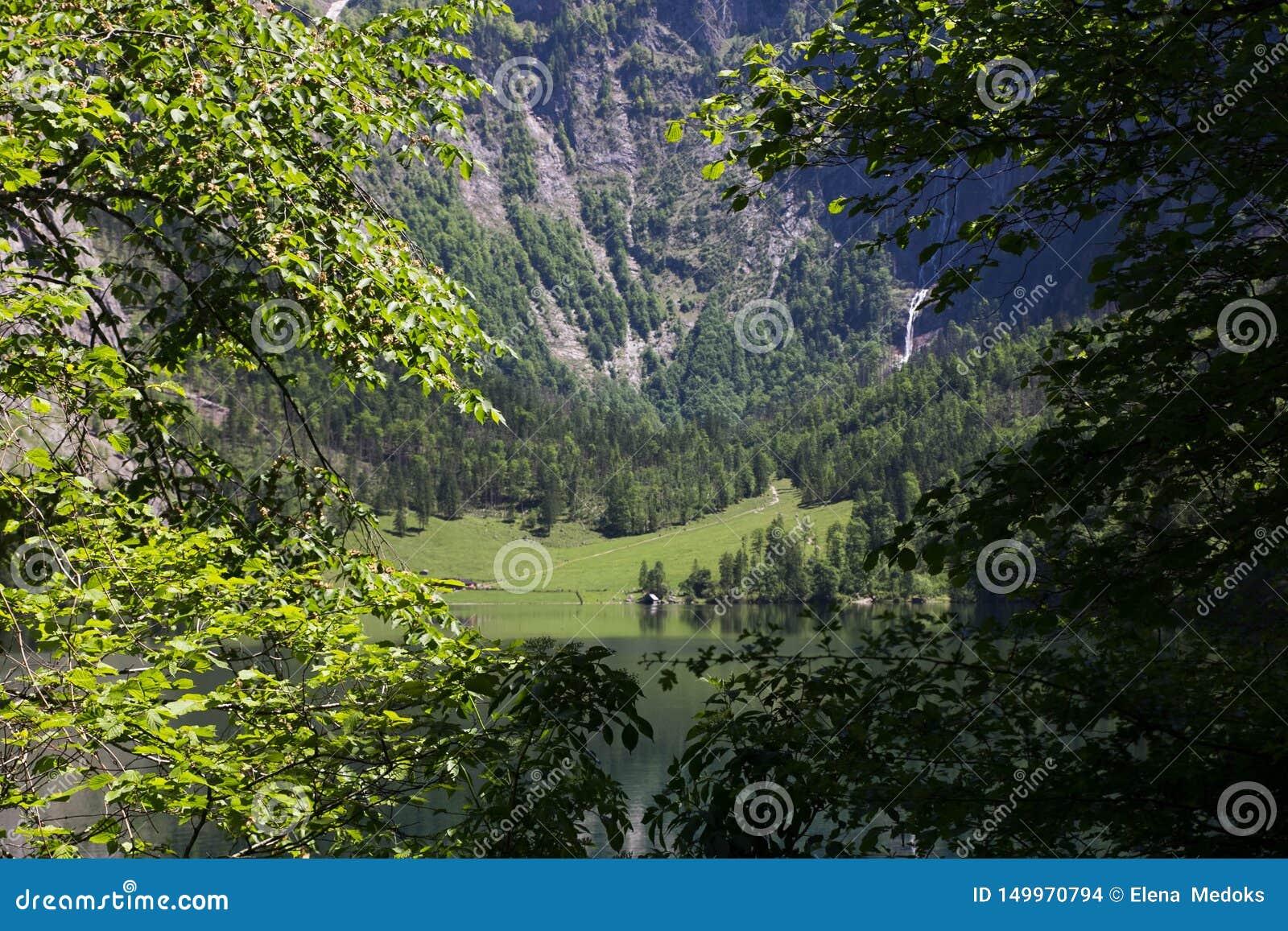 看法通过树春天绿色分支在一个高山湖的山的 观点的湖的另一边有的