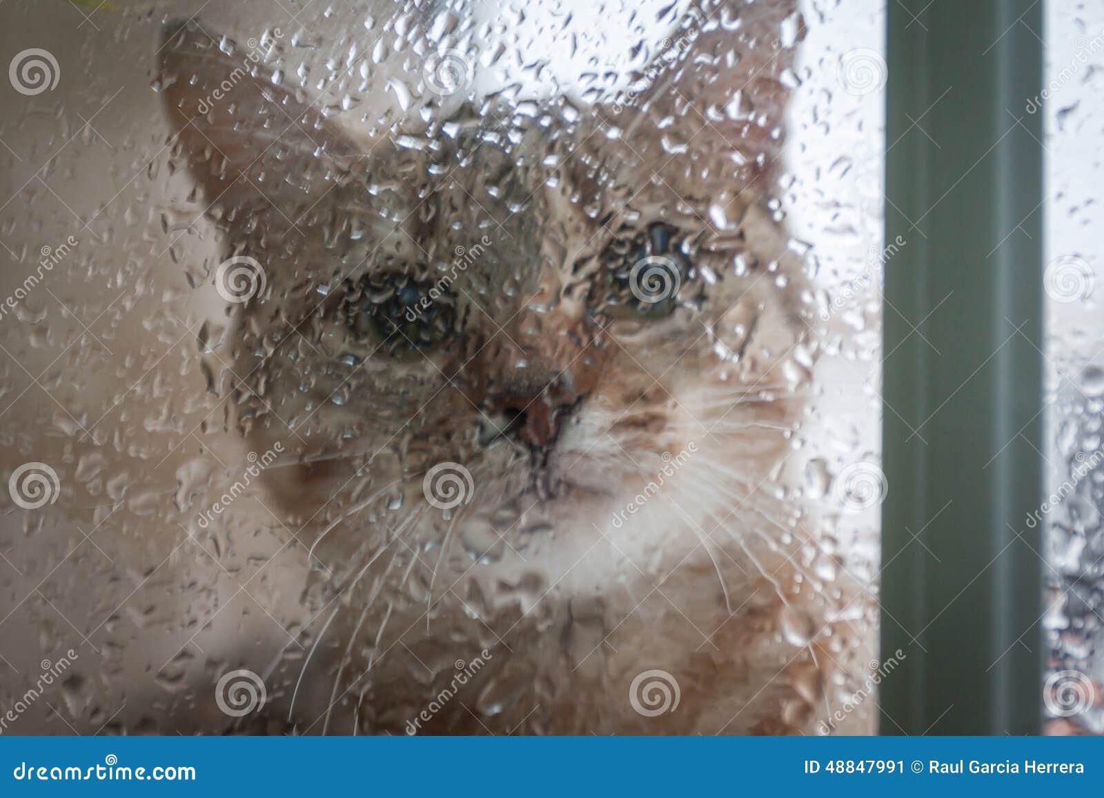 Rainy Cats Funny