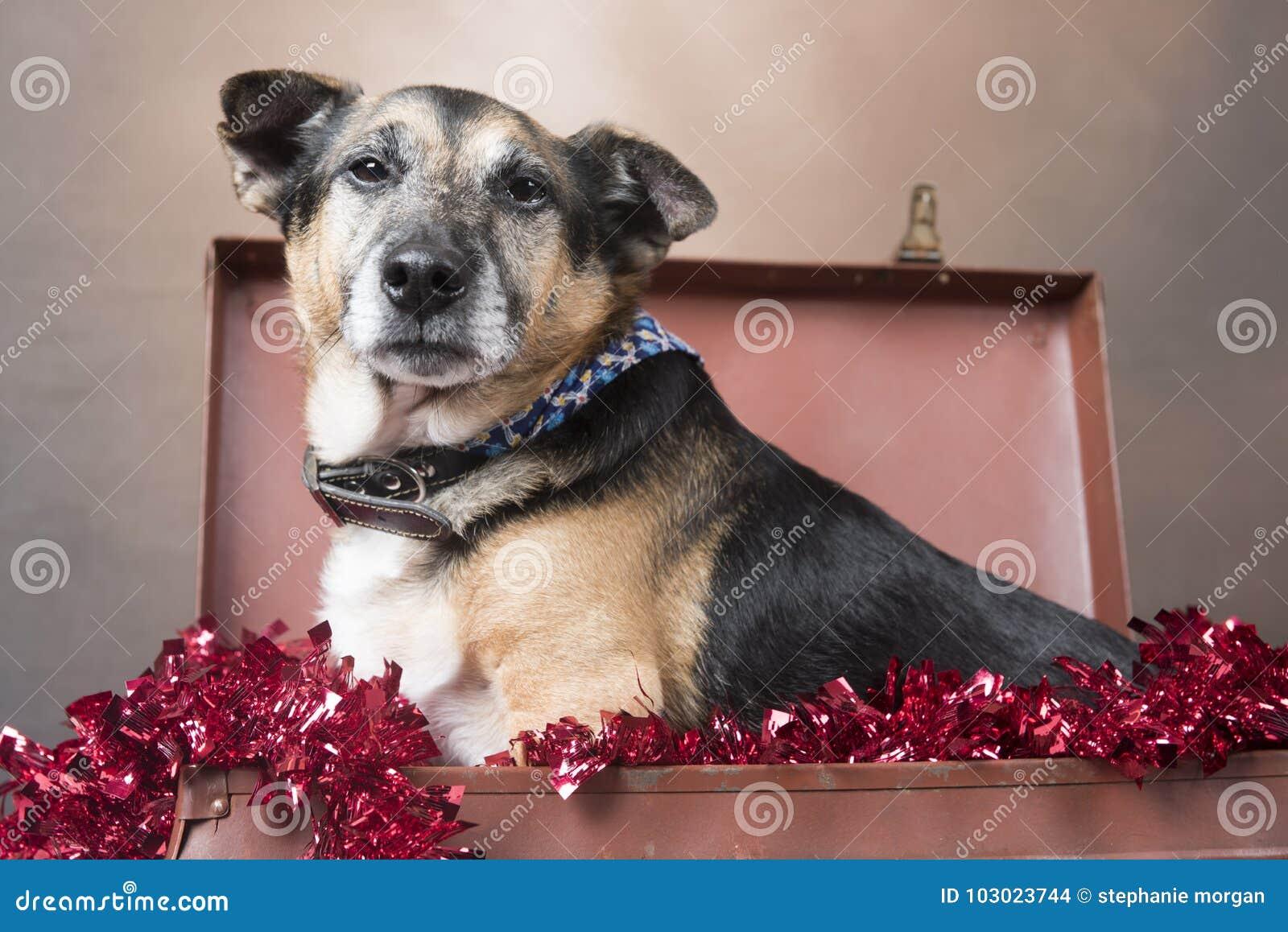 看起来在闪亮金属片中的小狗狗懊恼开会